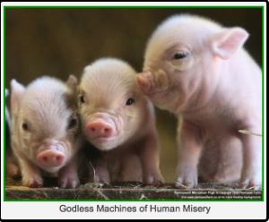 STFU About The Swine Flu | Rebranded Insanity